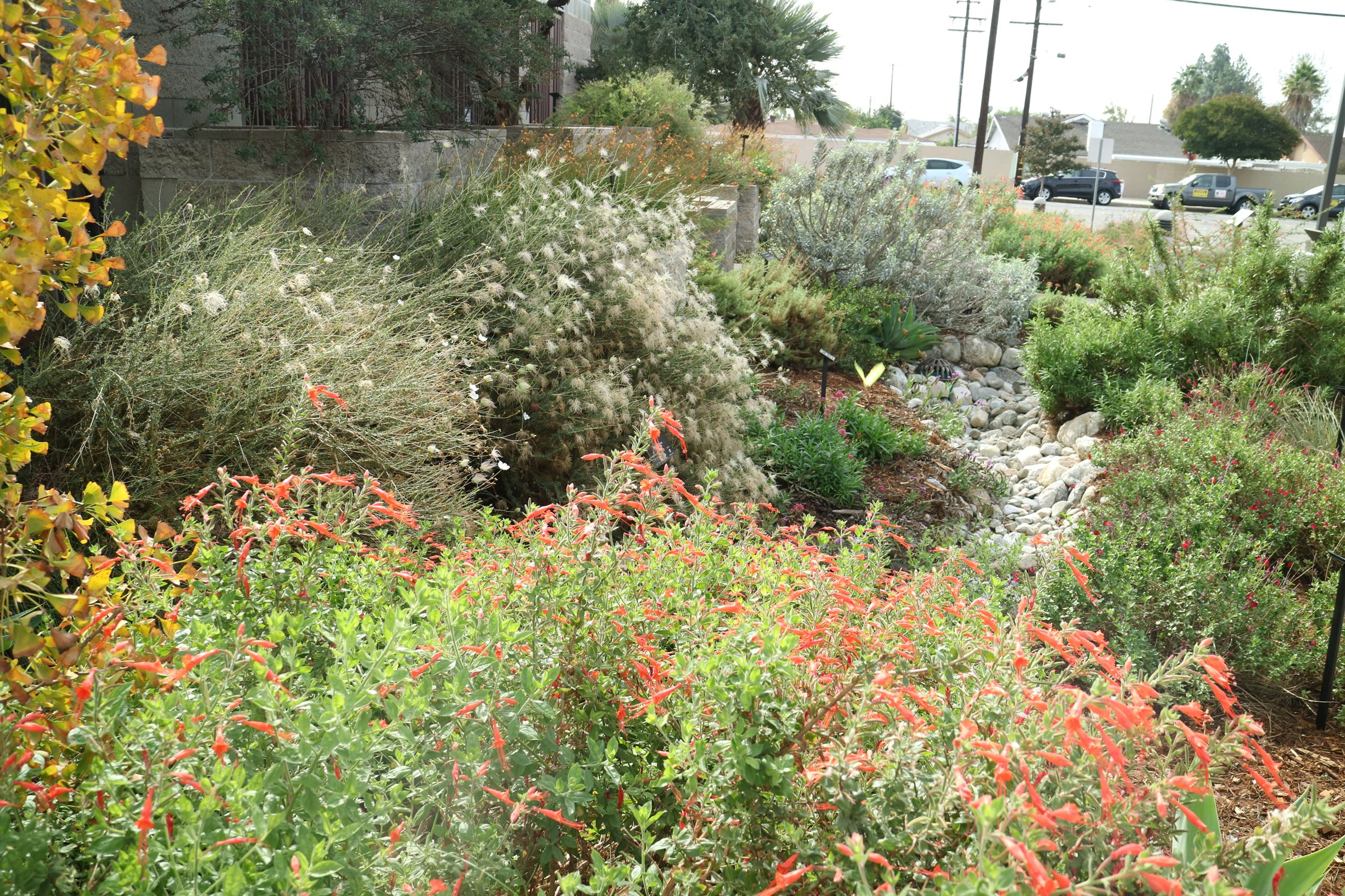 A demonstration garden at the Waterwise Community Center