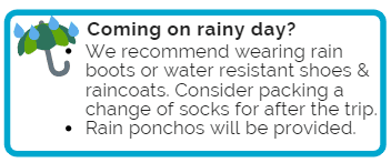 Coming on a rainy Day tips