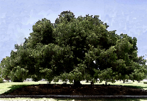 Oak Watercolor